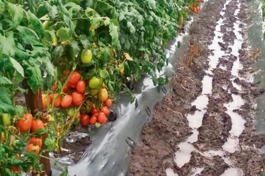 El efecto de las sorpresivas lluvias primaverales sobre la agricultura y los consumidores.