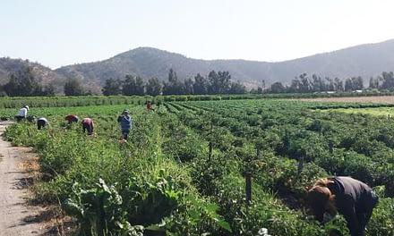 VIII Censo Agropecuario Forestal  2020
