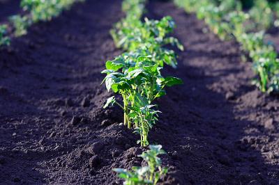 U. de Chile crea guía con consejos para cultivar alimentos en espacios urbanos