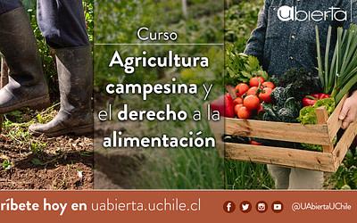 UAbierta UChile estrena nuevo curso sobre agricultura campesina y alimentación: abierto a Chile y América Latina