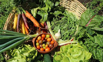 La biodiversidad en el camino para construir el derecho a alimentación