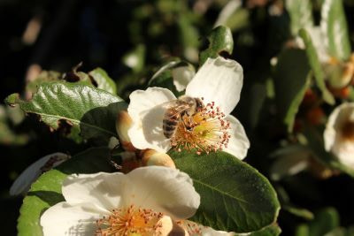 Las abejas trabajan en equipo con organización y comunicación