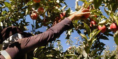 Alimentación y COVID-19: lecciones pasadas y retos presentes y futuros