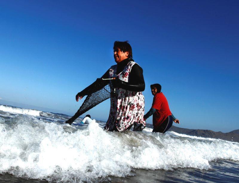 Favet realiza curso online para pescadoras artesanales